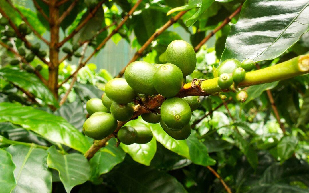 7 meilleures visites de plantations de café du Costa Rica